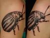 robert_franke_tattoo_bug