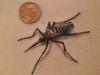 robert_franke_tattoo_mosquito